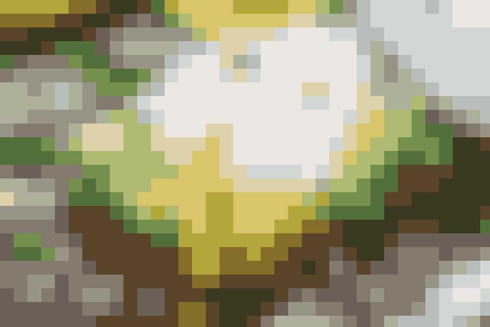Slankende avocadomad:1 skive groft knækbrød fx Wasa Rugsprø eller sport+, en kvart avokado samt et blødkogt æg. Ved at spise knækbrød får du stadig kulhydrat og fuldkorn, men i en begrænset mængde. Avokado indeholder en masse gode fedtstoffer, men er samtidig en kaloriebombe, hvorfor den bør spises i begrænsede mængder, hvis du ønsker at tabe dig.