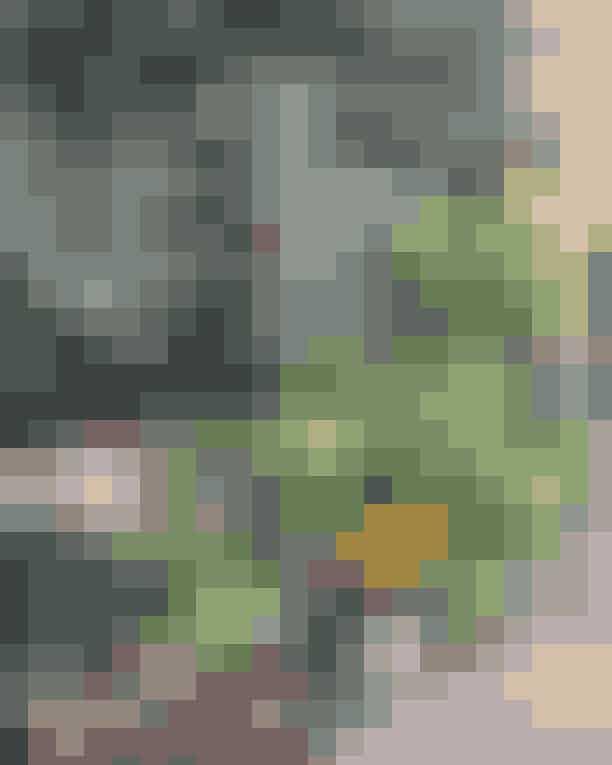BlomsterskuretHvis du elsker blomster og masser af dem, så skal du forbi Værnedamsvej, der har flere forskellige blomsterforretninger liggende. Særligt Blomsterskuret er et kig værd, hvor du mødes af nogle kompetente blomsterpiger, der båder binder buketter, sælger hjemmeproducerede potter og masser af planter og smukke blomster.Hvor: Værnedamsvej 3A, 1819 Frederiksberg.