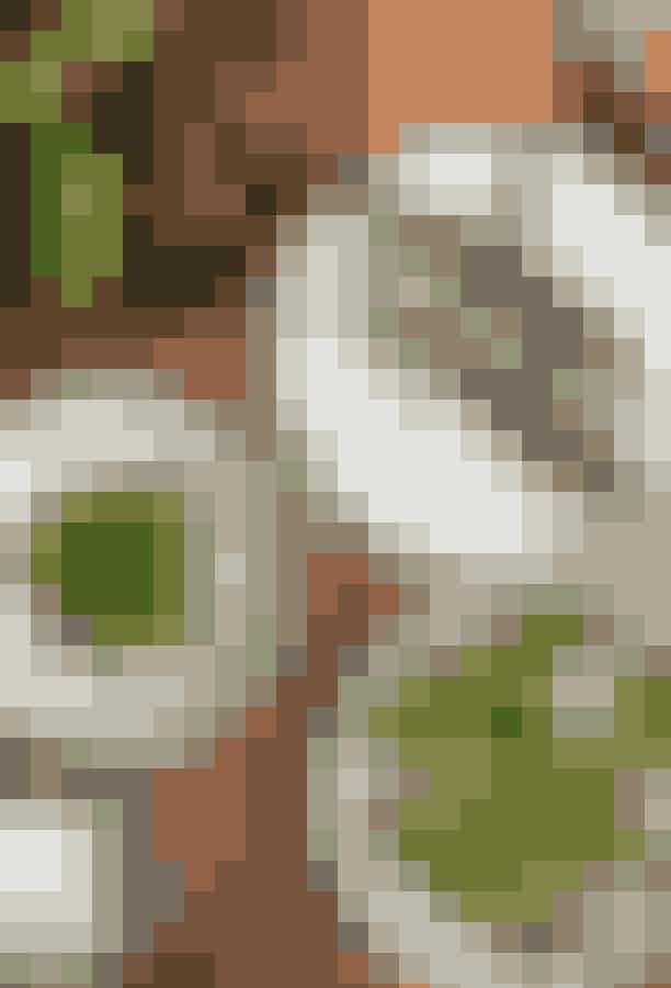 VækstI det københavnske latinerkvarter findes en af de hyggeligste (og lækreste) restauranter, nemlig Vækst, som er en del af Cofoco-kæden. På Vækst emmer der af nordiske toner, idet restauranten har taget udgangspunkt i Nordens friske grøntsager og urter, hvilket både kommer til syne i indretningen og på menukortet.Hvor:Sankt Peders Stræde 34, 1453 København KÅbningstider:Mandag - lørdag fra kl. 17.00-22.00.