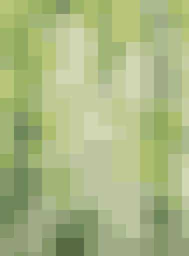 Hvid løvemund, Antirrhinum, er en rigtig generationsblomst, som vi kender fra vore bedste- og oldeforældre. Frø sås inde marts-maj og udplantes i haven fra maj   Tip: Løvemunds frø er små og skal ikke dækkes, kun trykkes til. Når planterne er ca. 10 cm, kan de øverste 5 cm klippes af, så planten forgrener sig. Fra froebutikken.dk