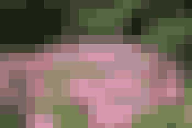 Franks top ti Her er Franks bud på de ti bedste, blomstrende bunddækkeplanter: Guldjordbær - Kærmindesøster Skumblomst - Timian Gemserod - Storkenæb Løvefod - Klokkeblomst Blåpude – Lungeurt  Floks kan også bruges som bunddække – blot et meget højt et af slagsen.