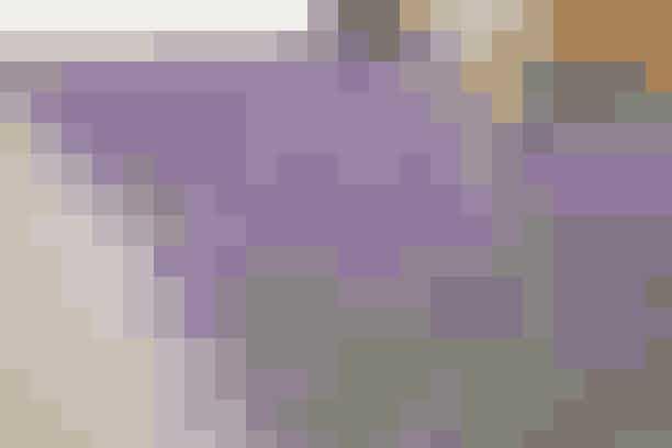 Lavendel bruges normalt som kantplante, men den kan også gøre det ud for et blomstrende bunddække.
