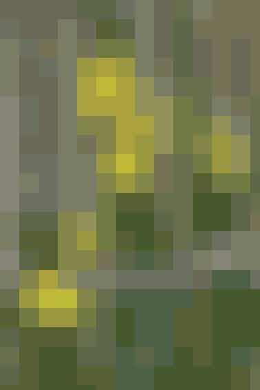 Tete-a-tete hedder de blomsterrige, gule dværg-påskeliljer, der bliver ca. 20-25 cm høje og får flere blomster på hver stilk