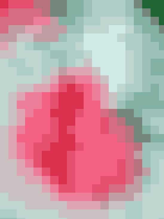 Rosensorbet71⁄2 dl rosensaft (se opskrift),fortyndet i forholdet 1:3Saften af 1 citronSukkerlage:21⁄2 dl vand200 g sukker (evt. mere)Pynt:Rosenchips (se opskrift )Opvarm sukker og vand til lagen i en gryde og rør rundt, til sukkeret er opløst. Bring lagen til kogepunktet, lad den simre 2 minutter og køl så af. Rør citron- og rosensaft i og frys massen i en ismaskine eller direkte i fryseren: Hæld massen i isbakker, helst af metal, som leder kulden. Frys isen halvt og hæld den så over i en skål. Pisk den blød og hæld massen tilbage i isbakkerne. Fortsat indfrysningen og pisk isen igennem to gange til, indtil den er stiv. Portionen giver ca.1 liter is.RosensaftBlade fra ca. 40 højrøde,halvfyldte roser2 spsk. citronsyreSaften af 2 citroner1 kg sukker1 l kogende vand1 tsk. flydende AtamonFremgangsmådeRosenblade, citronsyre, citronsaft og sukker blandes og overhældes med kogende vand. Tilsæt Atamon og lad det trække fem dage under låg og i køleskab. Si saften og hæld den på skoldede flasker. Dæk flaskerne med etklæde og prop dem først dagen efter. Opskriften giver ca. 11⁄4 liter saft, der skal fortyndes før brug i forholdet 1:4. Skal trække i mindst fem dage.