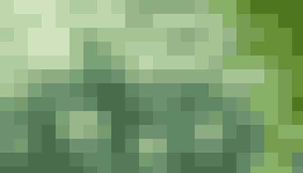 Sankthansurt, Hylotelephium telephium, fås efterhånden i mange udgaver med både grønne og røde blade. De kan alle spises og har en mild, frisk smag.