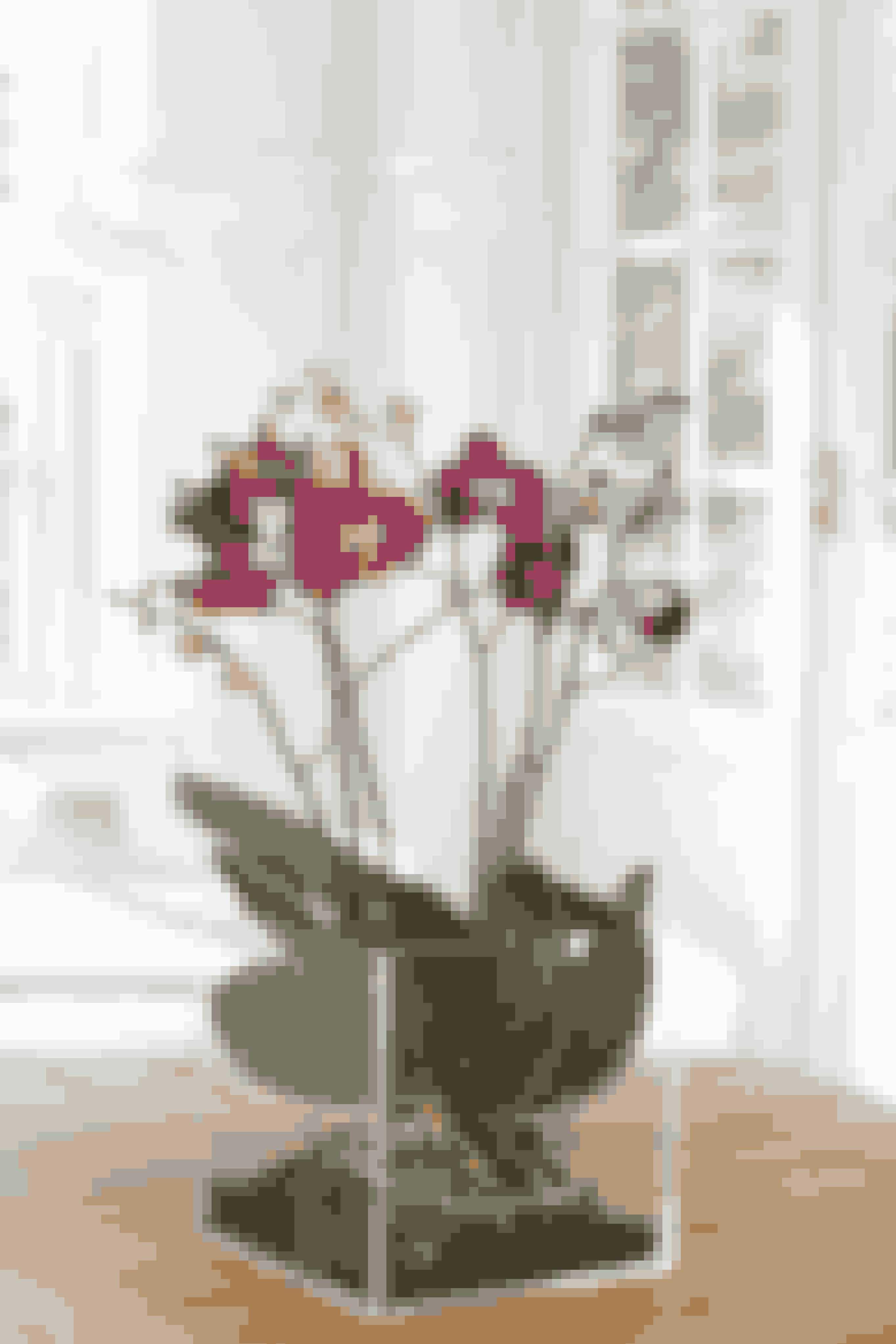 Tjek stueplanterne for spindemider og andet utøj.
