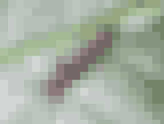 Ørentvister kan samles i sammenrullede aviser, der er stukket ned i tomme mælkekartoner.