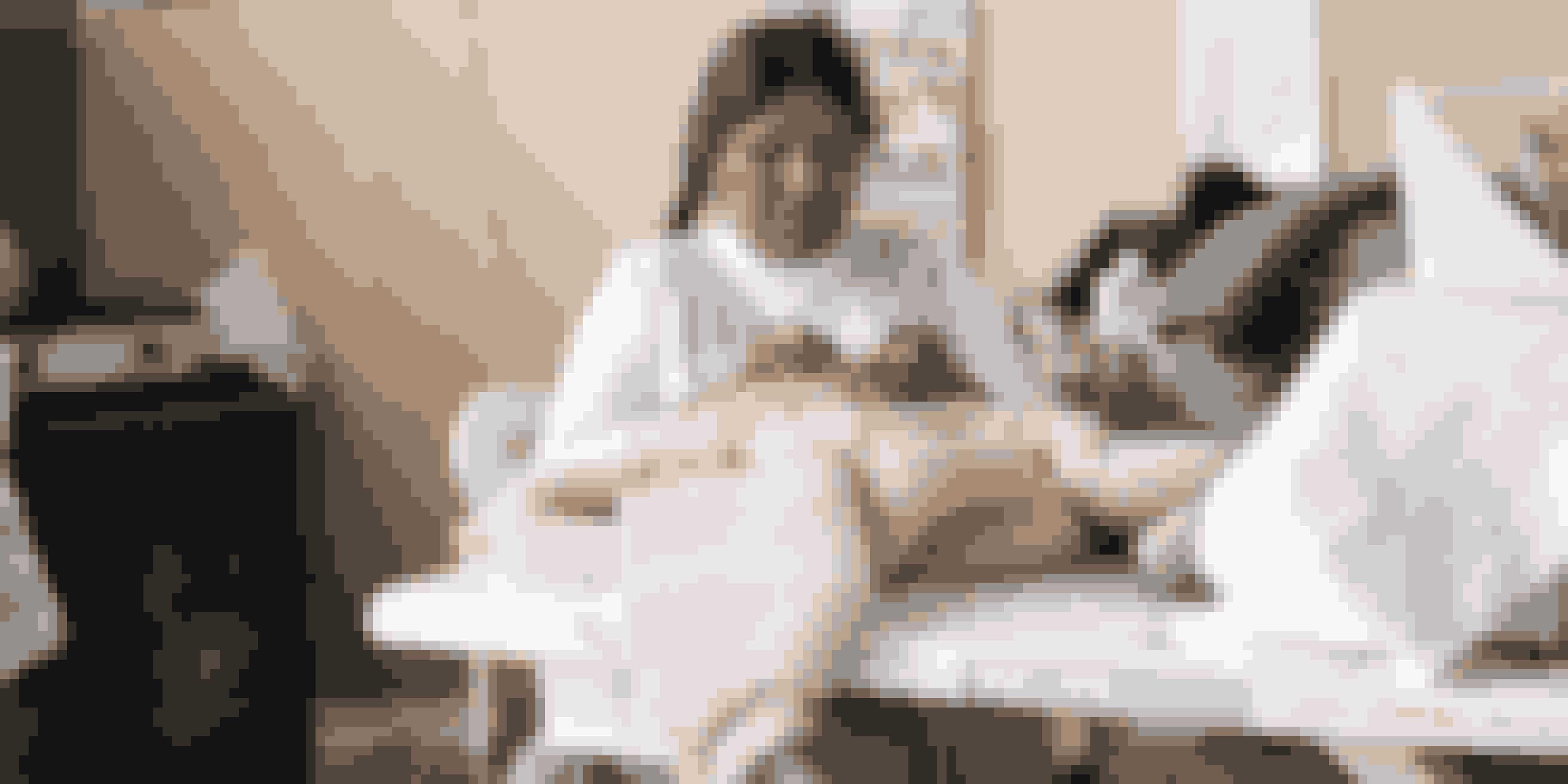 Carcel produceres i et kvindefængsel i Peru og snart også Thailand.