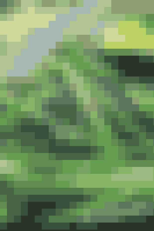 Grillede grønne asparges:   Grillede grønne asparges er super lækkert, sundt og nemt. Ønsker du et ekstra twist, så rul 3-4 asparges ind i en skive parmaskinke. Det er et bedre alternativ end bacon, og ved at rulle flere asparges sammen holder du kalorieindholdet nede.  Kilde: Healthyskinnybitch.dk