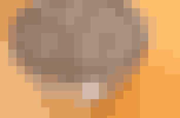 Chiafrøene bliver hyldet for tiden som verdens sundeste frø, og der er en grund til al dette postyr. Det er nemlig i sandhed et utrolig sundt lille frø med et højt indhold af jern, protein, antioxidanter og zink. Og så er frøene så små, at de jo kan listes ind i mange forskellige retter uden den store ballade – også i smoothien.