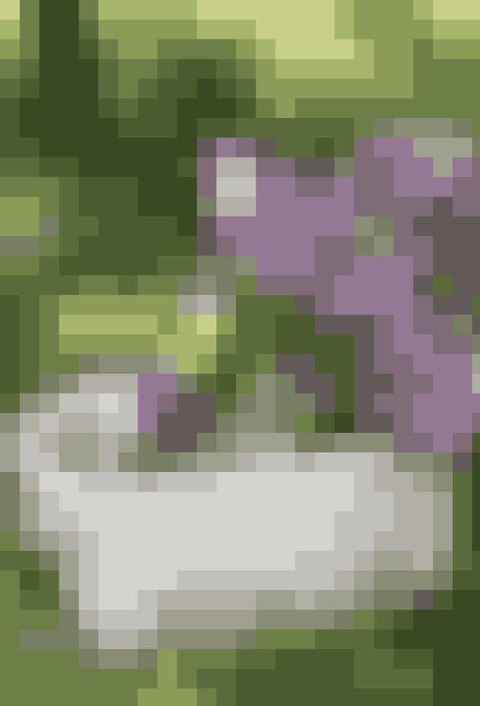 Få mest muligt ud af syrenerne, mens de blomstrer og tag en duftende buket med indenfor. Fylden vase med varmt vand, tag bladene af grenene, knus enden af stilken med en hammer, kom syrenerne i det varme vand og lad grenene trække ivandet, indtil det er blevet køligt, så holder din buket længere!