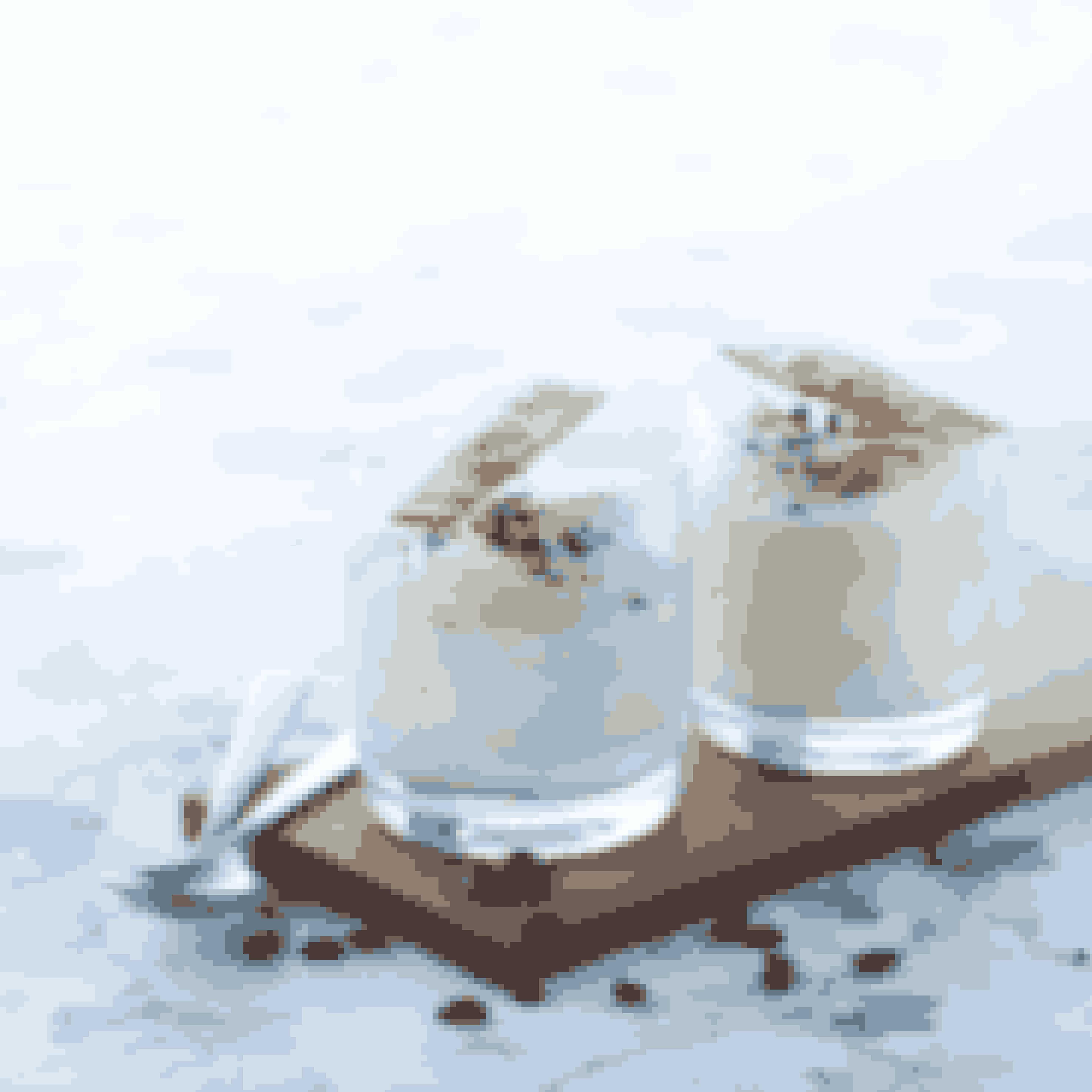Antal: 4-6 personer.Det skal du bruge for at lave parfait med kaffe og sprøde kiks½ l piskefløde8 pasteuriserede æggeblommer120 g flormeliskorn af 1 god vaniljestang½ dl meget stærk kaffePYNT:10 knuste kaffebønnerSPRØDE KIKS:20 g flormelis20 g blødt smør25 g hvedemel½ æggehvidePYNT:25 g mandelflagerSådan laver du parfait med kaffe og sprøde kiksPisk fløden til skum, og sæt til side.Pisk æggeblommerne helt lyse og luftige med flormelis og vaniljekorn – det tager ca. 6 minutter med en elpisker.Hæld kaffen i, og rør godt.Vend lidt af flødeskummet i æggemassen, og vend så blandingen i resten af flødeskummet til en ensartet, luftig creme.Fordel cremen i små glas, og luk dem til med husholdningsfilm.Frys dem i mindst 4 timer – gerne natten over.Sprøde kiks: Rør flormelis med det bløde smør; tilsæt hvedemelet, og vend forsigtigt æggehviden i lidt efter lidt, til dejen er glat og let tyk. Smør dejen ud helt tyndt på bagepapir på en bageplade, brug evt. en skabelon (f.eks. et fladt plastiklåg, hvor du skærer den ønskede form ud). Drys med mandelflager.Bag de små kager midt i ovnen ved 165° i 2-4 minutter. Tag forsigtigt de færdigbagte kager af bagepladen, og lad dem afkøle på en rist.Drys isen med kaffebønner, og servér kagerne til.