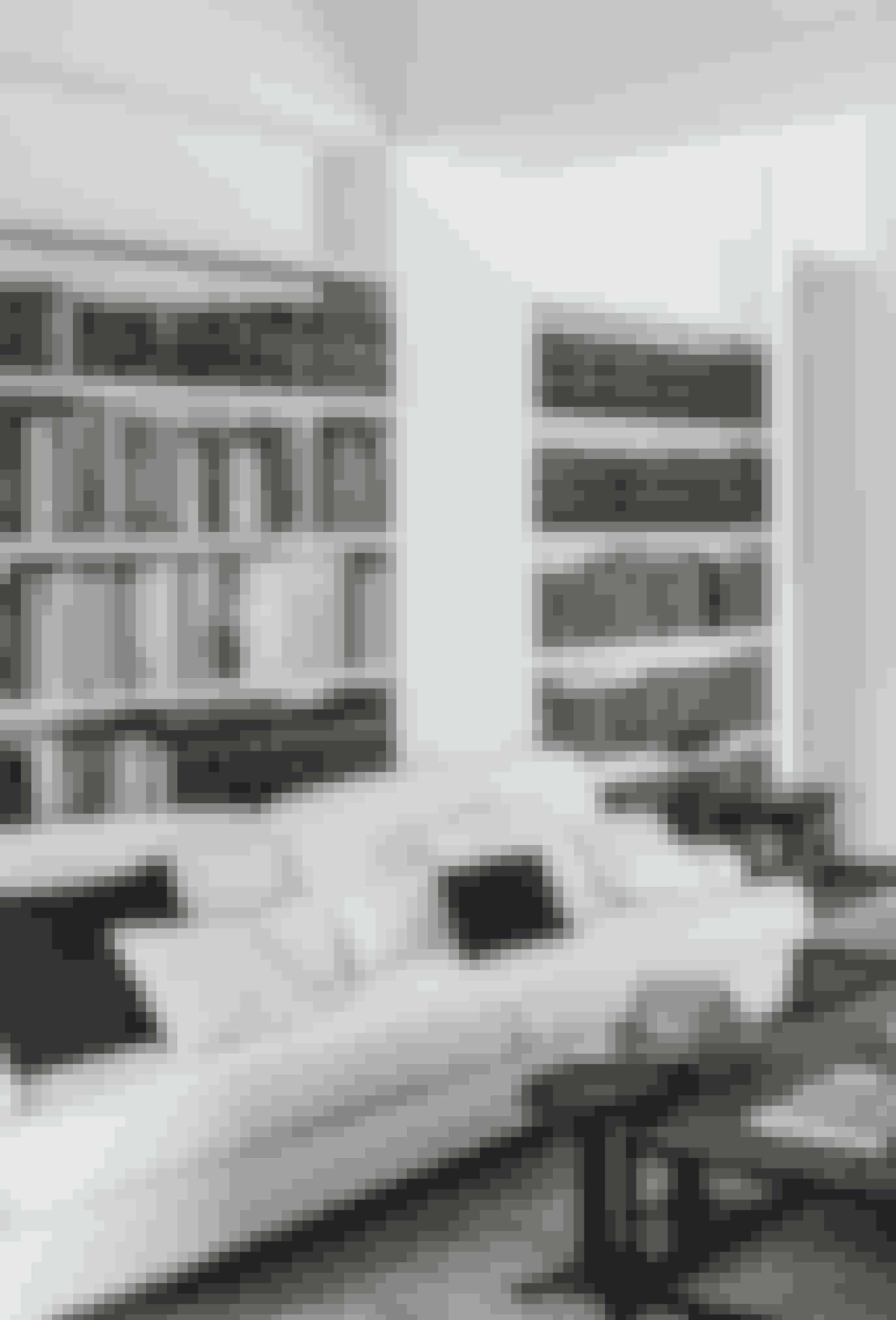 De mange smukke, gamle bøger kommer til deres ret i den enkelte hvide reol i stuen.