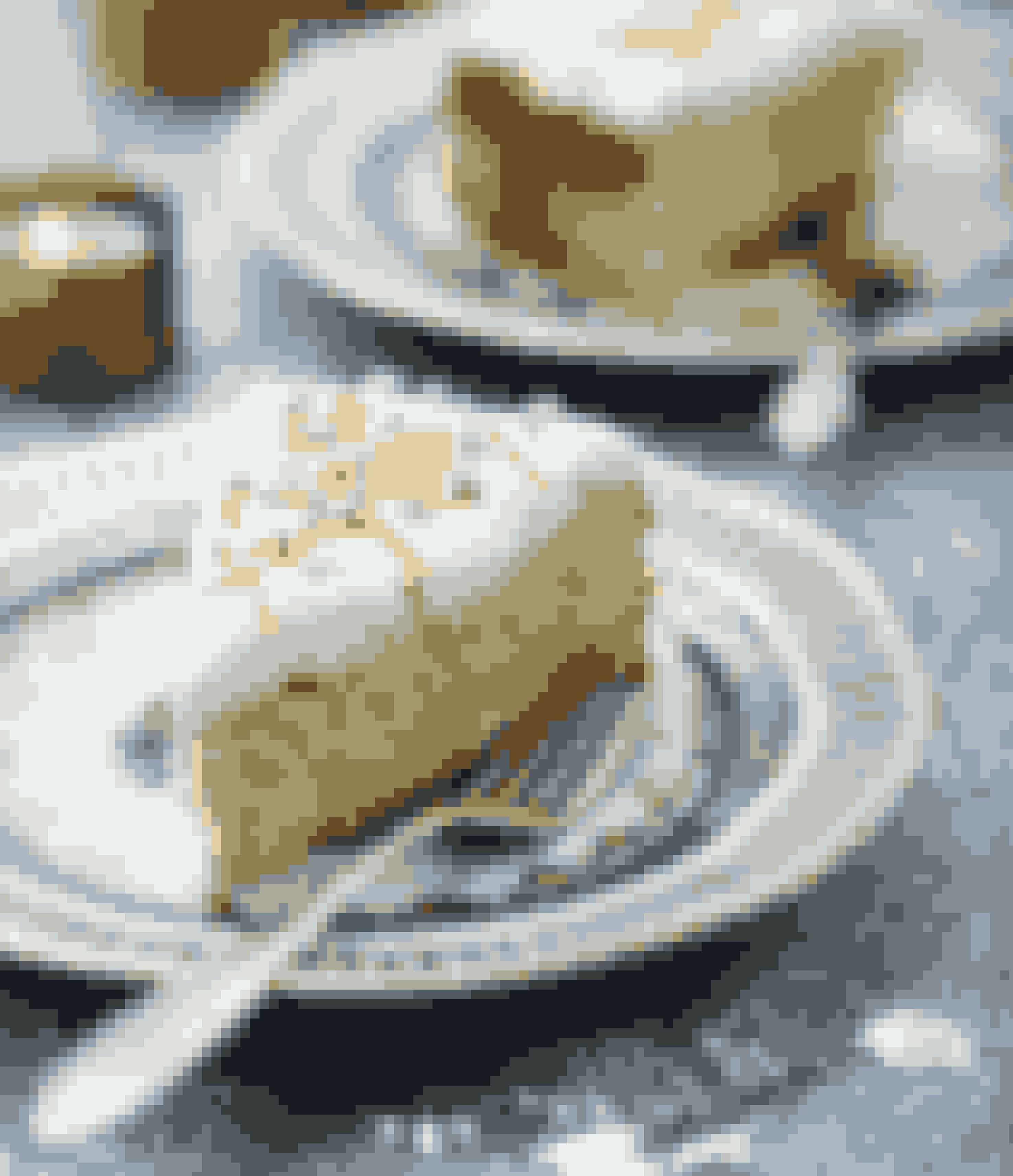 En blød og saftig marcipankage med enfrisk smag af appelsin.Tid: 25-30 minutter. Bagetid: 25-30 minutter.Antal kagestykker: Ca. 12Det skal du bruge for at lave himmelsk appelsinkage med ricotta150 g blødt smør300 g marcipan5 store ægSkal af 2 appelsiner, usprøjtede250 g ricotta½ dl hvedemelEn springform (ca. 20 cm i diameter)Bagepapir og smør eller olie til formen Appelsinfrosting: 200 g fl ødeost naturel, saft af 1 appelsin, 50 g flormelisPynt: sølvkugler og revet appelsinskalSådan laver du himmelsk appelsinkage med ricotta1. Tænd ovnen på 175º. Beklæd springformenmed bagepapir i bunden, og smør kanterne.2. Rør smør og marcipan cremet med en elpisker.Tilsæt æg 1 ad gangen under piskning.3. Riv skallen på begge appelsiner fi nt (gemlidt til pynt). Pres saften af den ene appelsin,og gem saften til glasuren. Rør appelsinskalleni dejen sammen med ricotta og mel.4. Fordel dejen i springformen, og bag kagen i25-30 minutter. Tjek med en strikkepind, atden er gennembagt. Lad den afkøle i formen.5. Appelsinfrosting: Rør flødeost sammenmed flormelis og appelsinsaft.6. Smør appelsinfrosting på kagen, og pyntmed revet appelsinskal og sølvkugler.