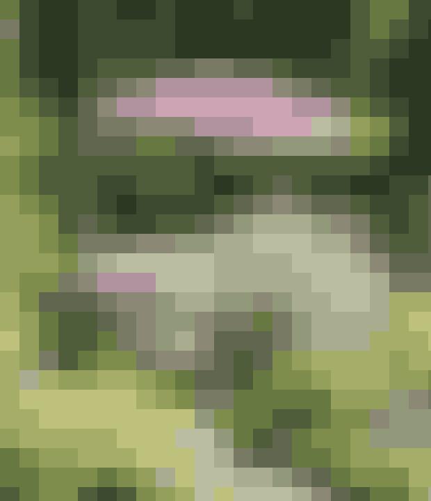 Stauder i højden giver naturlige lækroge og små grønne huler, og planter du dem hele vejen omkring huset, kan du altid finde et sted med sol.