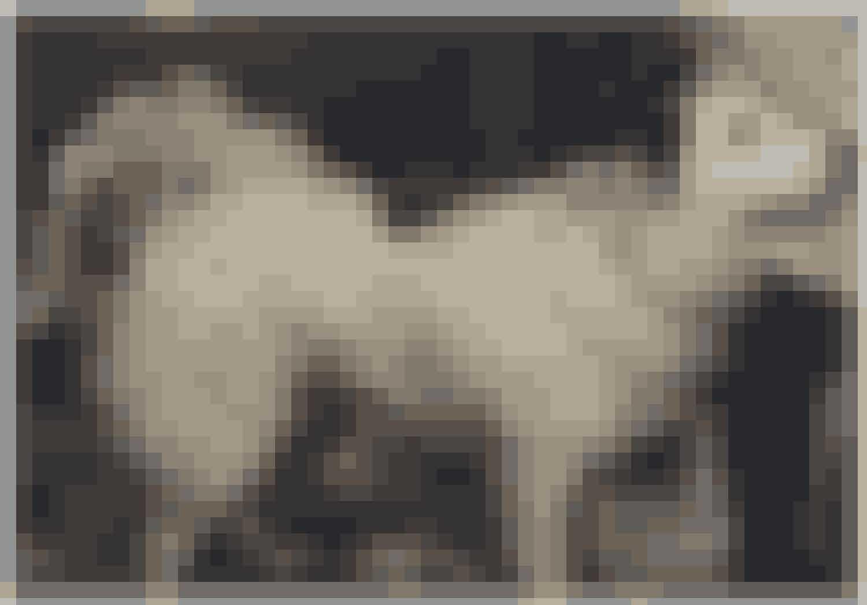 """Vi rekonstruerede det, der var sket på havnen, og hunden her """"spillede"""" den hvide hund, som blev dræbt sammen med dens ejer, fortæller Bent Isager-Nielsen"""