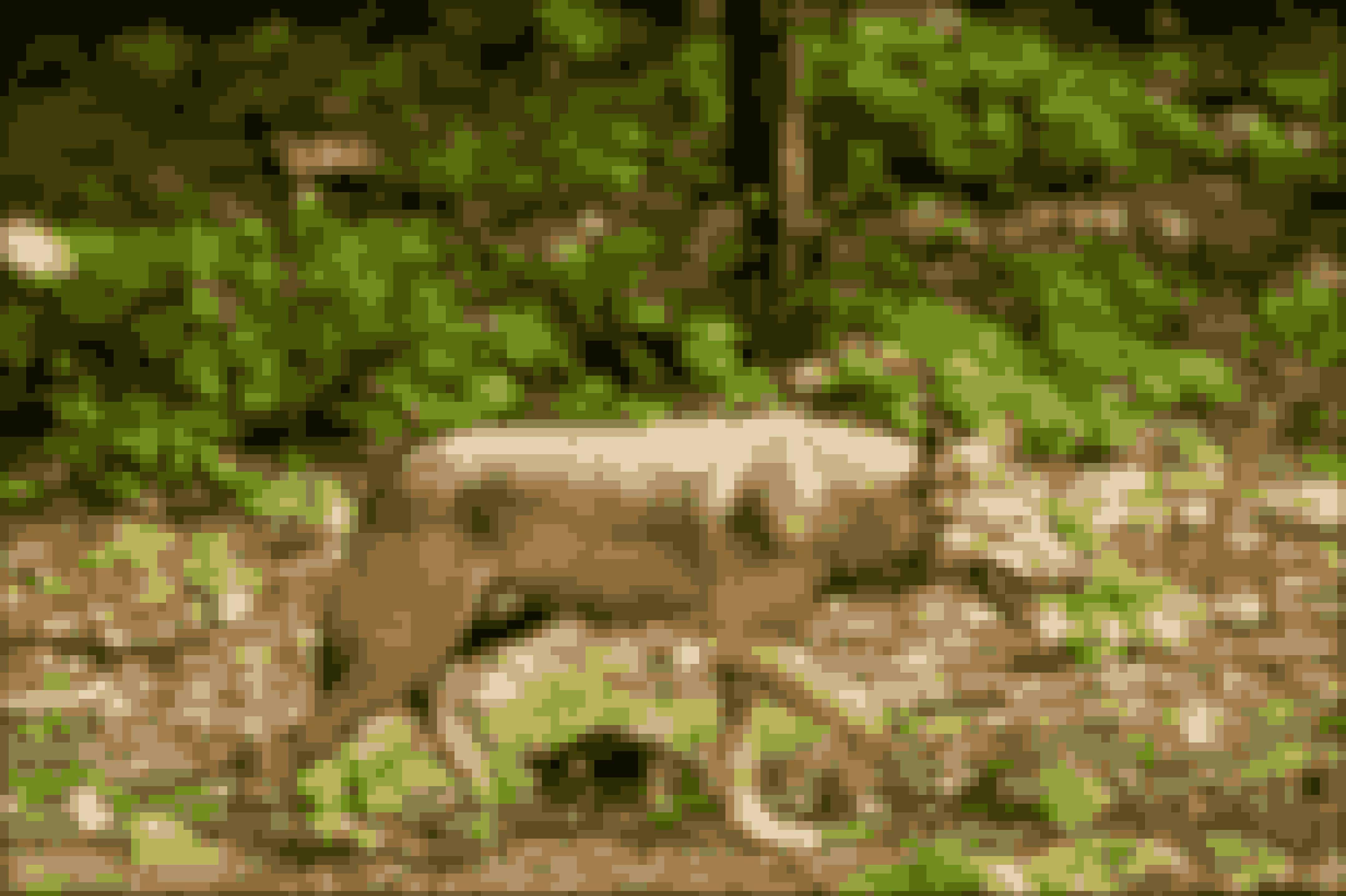I 2018 skød en mand en fredet ulv på en mark ved Ulfborg. En forseelse, som Vestre Landsret i Viborg idømte ham 40 dages betinget fængsel for, ligesom han fik frataget sit jagttegn i to år. Her ses en ulv i Skånes dyrepark.
