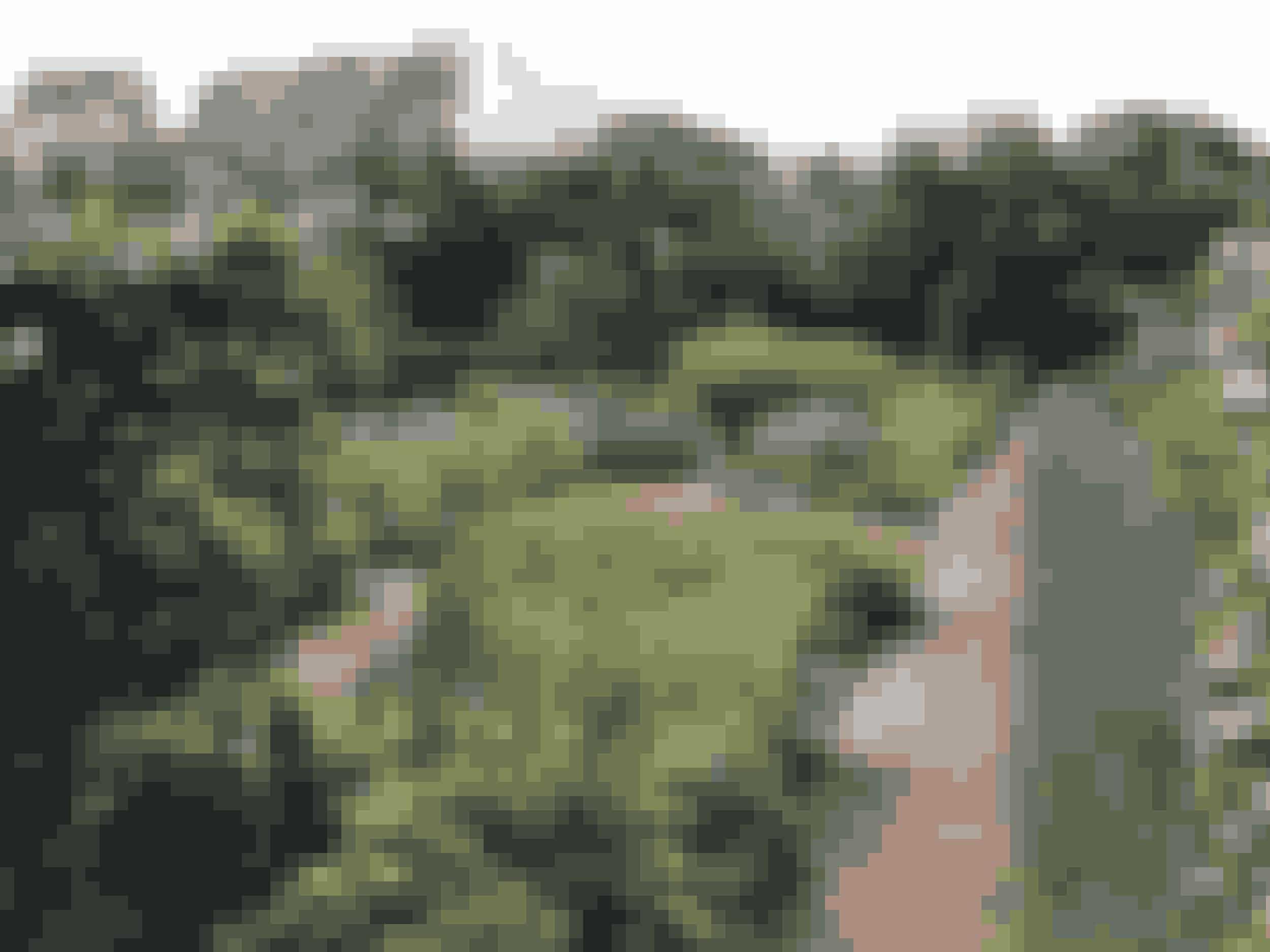 """Spøttrup Borg kender nogle måske fra DR-programmet """"Søren Vesters Have"""", hvor den nordjyske designer besøgte middelalderhaven med de sirlige stisystemer og spiselige lægeurter.Spøttrup Borg i Salling, Nordjylland, er en af Danmarks bedst bevarede 1500-talsborge, og i de nærmeste omgivelser finder man Spøttrup Sø med et rigt dyre- og fugleliv og en smuk park, som med rosenhave og læge- og krydderurteanlæg bestemt er et besøg værd. Hvert år arrangerer Spøttrup Borg et væld af aktiviteter, fra musik og udstillinger til teater og markedsdage, og man kan også komme på rundvisning på borgen.Entréen koster 80 kroner for voksne, og børn op til 17 år er gratis. Borgen og haverne er åbne klokken 11-16 i oktober, og mandag er der lukket, undtagen i uge 42. Hunde i snor må medtages i parken, men ikke ind på borgen."""