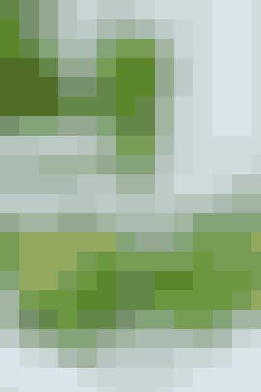 Opskrift af Kim Gravenhorst  Ingredienser: 25 g optøet spinat, 4 dl æblejuice, 2 dl ærter, 10 mynteblade + lidt til pynt, ½ squash   Sådan gør du: Hak spinaten groft med en kniv og kom den i en blender sammen med æblejuice, ærter, mynteblade og squash skåret i små stykker. Blend det helt ud og servér drikken i iskolde glas med lidt mynteblade på toppen.