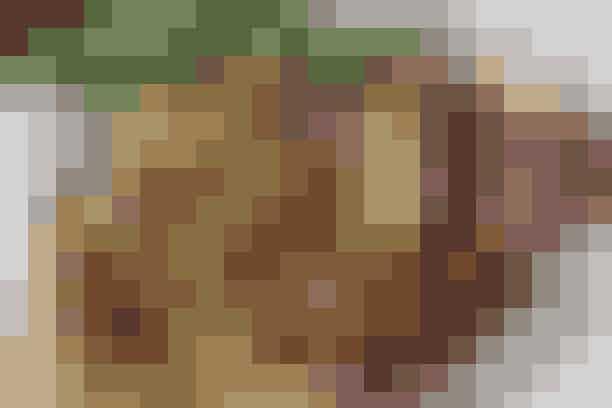 Brændende kærlighed Af Pia Friis Andreassen/Foto: Martin Tanggaard Nem og billig mad      4 personer  Det skal du bruge:  Kartoffelmos:   2½-3 kg bagekartofler  Ca. 2 dl varm mælk  Ca. 3 spsk. smør  Salt og peber   Tilbehør:  ½ kg rødbeder  2 spsk. olie  1½ tsk. timian  250 g bacon i tern  4 store løg  2 spsk. olie  Salt og peber  1 potte persille   Prøv også: Alt i en gryde  Sådan gør du:  Kartoffelmos:  Skræl kartofler og skær i grove tern. Koges møre i en stor gryde med rigeligt vand. Hæld vandet fra. Mos kartoflerne samtidig med at mælken tilsættes. Smag til med smør, salt og peber   Tilbehør:   Opvarm ovnen til 2000. Skræl rødbederne og skær i små tern. Vend dem med olie og timian på en plade med bagepapir. Steges i den varme ovn, til de er møre, men stadig har bid.  Pil løgene og skær i tern. Steg bacon gylden og let sprødt på en sauterpande. Kasser stegefedtet, men gem 2 spiseskefulde. Tilsæt olien og steg løgene med, til de er bløde og gyldne. Krydr med salt og peber.  Vend de stegte rødbeder og persille heri.   Tilberedningstid:   Ca. 45 min., heraf arbejdstid ca. 30 min.  Prøv også: Linsesuppe med marinerede rejer
