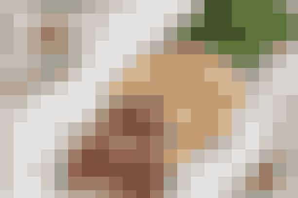 Kødbolle-spyd med broccoli  Af Pia Friis Andreassen/Foto: Martin Tanggaard    Gode kødboller på spyd -server med sund broccoli      4 pers.   Ingredienser til kødbolle-spyd med broccoli   Kødbolle-spyd:  500 g hakket svinekød 8-12 %  2 finthakkede fed hvidløg  1 tsk. paprika  ½ tsk. cayennepeber  1 tsk. stødt spidskommen  1 spsk. citronsaft  2 spsk. fiske- eller sojasauce  2 spsk. olie til stegning  12 små kødspyd   Tilbehør:  4 dl fuldkornsris  1 broccoli, salt  Sød chilisauce   PRØV OGSÅ: Pasta og kødsauce   Fremgangsmåde Tilbehør:   Kog risene efter anvisningen på emballagen. Skær broccolien i lange, tynde stykker. Damp dem netop møre i letsaltet vand.   Kødbolle-spyd:   Kom kødet i en skål og tilsæt de øvrige ingredienser. Ælt det hele godt sammen. Fordel farsen på spyddene og steg disse i olie på en pande i ca. 5 min. på hver side over middelstærk varme. Servér kødbolle-spyddene med ris, broccoli og lidt sød chilisauce.   Tilberedningstid:   Ca. 40 min., heraf arbejdstid ca. 15 min.  PRØV OGSÅ: Minifarsbrød og kartoffelmos