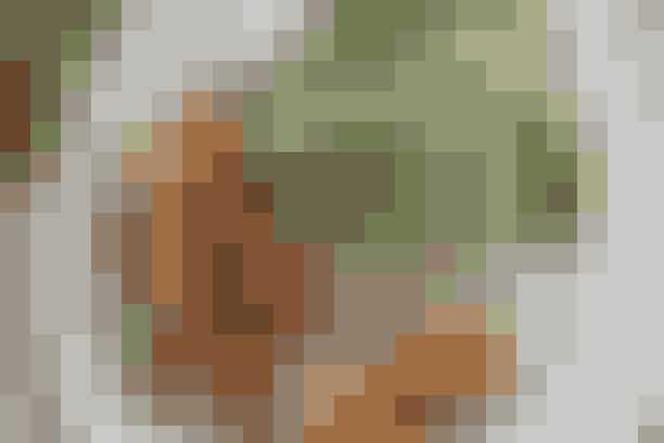Fiskedeller og salat med citrondressing  Af Pia Friis Andreassen/Foto: Martin Tanggaard   Gode fiskefrikadeller med sundt tilbehør      4 pers.  Ingredienser til fiskedeller og salat med citrondressing  Fiskefrikadeller:  225 g torskefilet 225 g laksefilet  1½ tsk. salt 4 spsk. havregryn  ½ dl mælk 1 æg Olie til stegning   Stegte kartofler:  3 store bagekartofler 2 spsk. olie Salt   Salat:  250 g cremefraiche 18 %  1-2 spsk. citronsaft  1 tsk. sukker ½ tsk. salt  2 mini-romainesalater  300 g grønne ærter   PRØV OGSÅ: Pasta og muslinger   Fremgangsmåde Stegte kartofler:  Skrub kartoflerne rene. Skær dem i både. Vend dem med olie på en plade med bagepapir. Steg dem gyldne og møre i en 225° varm ovn. Det tager ca. 25 min.   Fiskefrikadeller:   Skær de to slags fisk i grove tern. Kør dem i en foodprocessor til en grofthakket masse med salt og havregryn. Tilsæt mælk og sammenpisket æg og form farsen til frikadeller, der steges i olien over middelstærk varme i ca. 3 min. på hver side.   Salat:   Rør cremefraiche med citronsaft, sukker og salt. Del salaten i blade og vend dem i dressingen. Vend ærterne i.   Tilberedningstid:  Ca. 45 min., heraf arbejdstid ca. 30 min.  PRØV OGSÅ: Fish and chips