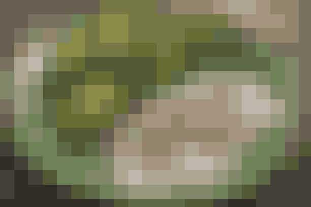Kalkun med tunsauce  Af Pia Friis Andreassen/Foto: Martin Tanggaard    Lækker aftensmad til familien      4 pers. Ingredienser til kalkun med tunsauce  900 g kalkunbryst 1 løg skåret i kvarter 4 fed hvidløg 2 laurbærblade 8 peberkorn ½ potte basilikum til pynt   Tunsauce:  2 dåser tun i vand (afdryppet) 1 glas kapers (60 g afdryppet vægt)  2 dl mayonnaise ½ potte basilikum Salt og peber   Salat:  2 hjertesalathoveder 100 g spæde salatblade saften af ½ citron 3 spsk. koldpresset olie Salt   Tilbehør:  Groft brød   PRØV OGSÅ: Paella med kylling   Fremgangsmåde Kalkun: Hæld koldt vand på kalkunbrystet, så det lige dækker. Tag kalkunbrystet op igen og bring vandet i kog. Tilsæt kalkun, løg, hele hvidløgsfed, laurbærblade og peberkorn. Lad det småkoge under låg, til kødet er mørt (ca. 45 min.). Tag det op og lad det afkøle. Gem lidt til madpakkerne tirsdag.   Tunsauce: Kør ingredienserne i en foodprocessor. Smag til med salt og peber.   Salat: Bræk hjertesalaten i mindre stykker og bland den med de spæde salatblade. Tilsæt olien til citronsaften i en tynd stråle, mens der røres. Smag til med salt. Vend dressingen med salatbladene.   Tilberedningstid:   Ca. 1 time og 10 min., heraf arbejdstid ca. 25 min.  PRØV OGSÅ: Kalkunspyd og salat