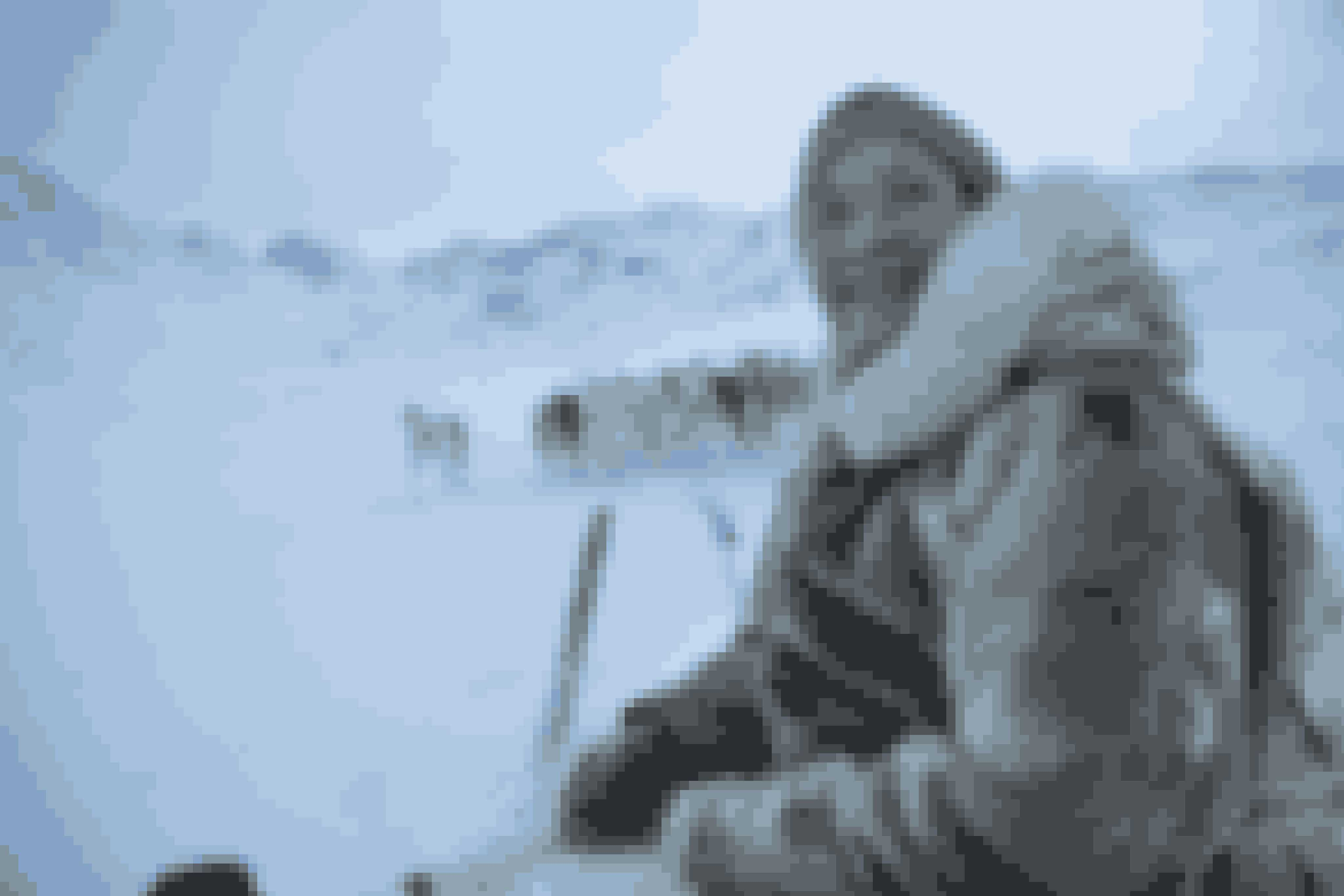 Johanne Bech startede sin karriere som frisør og tandtekniker. Nu er hun en af de ganske få kvindelige grønlandske fangere.