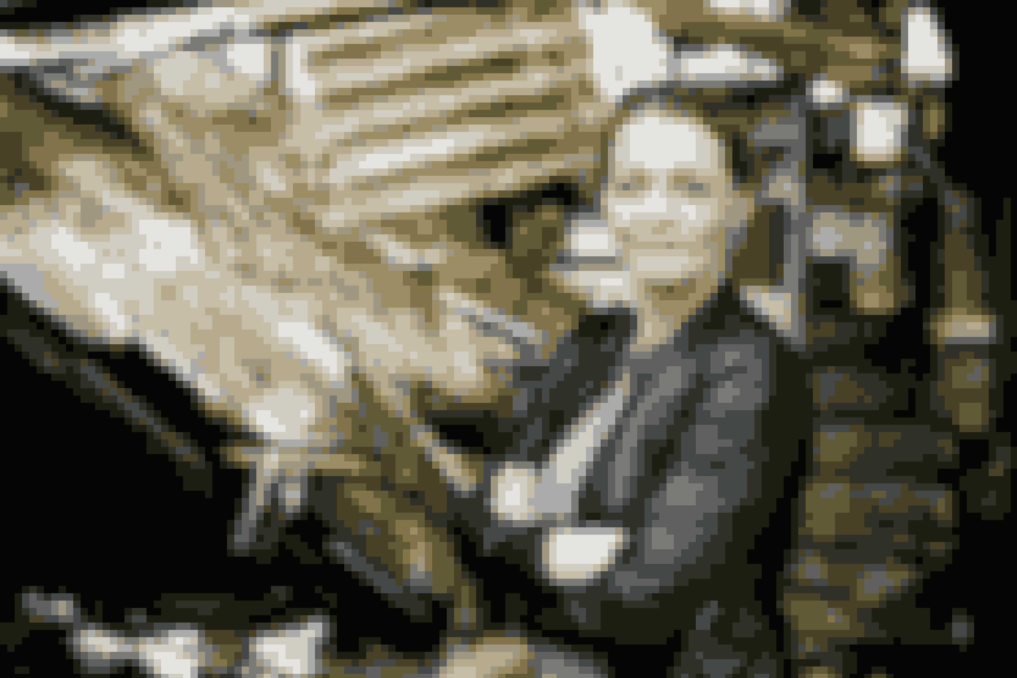 """Stine Bolther er kriminalreporter og virkelighedens """"Dicte"""", som vi kender fra TV2-serien."""