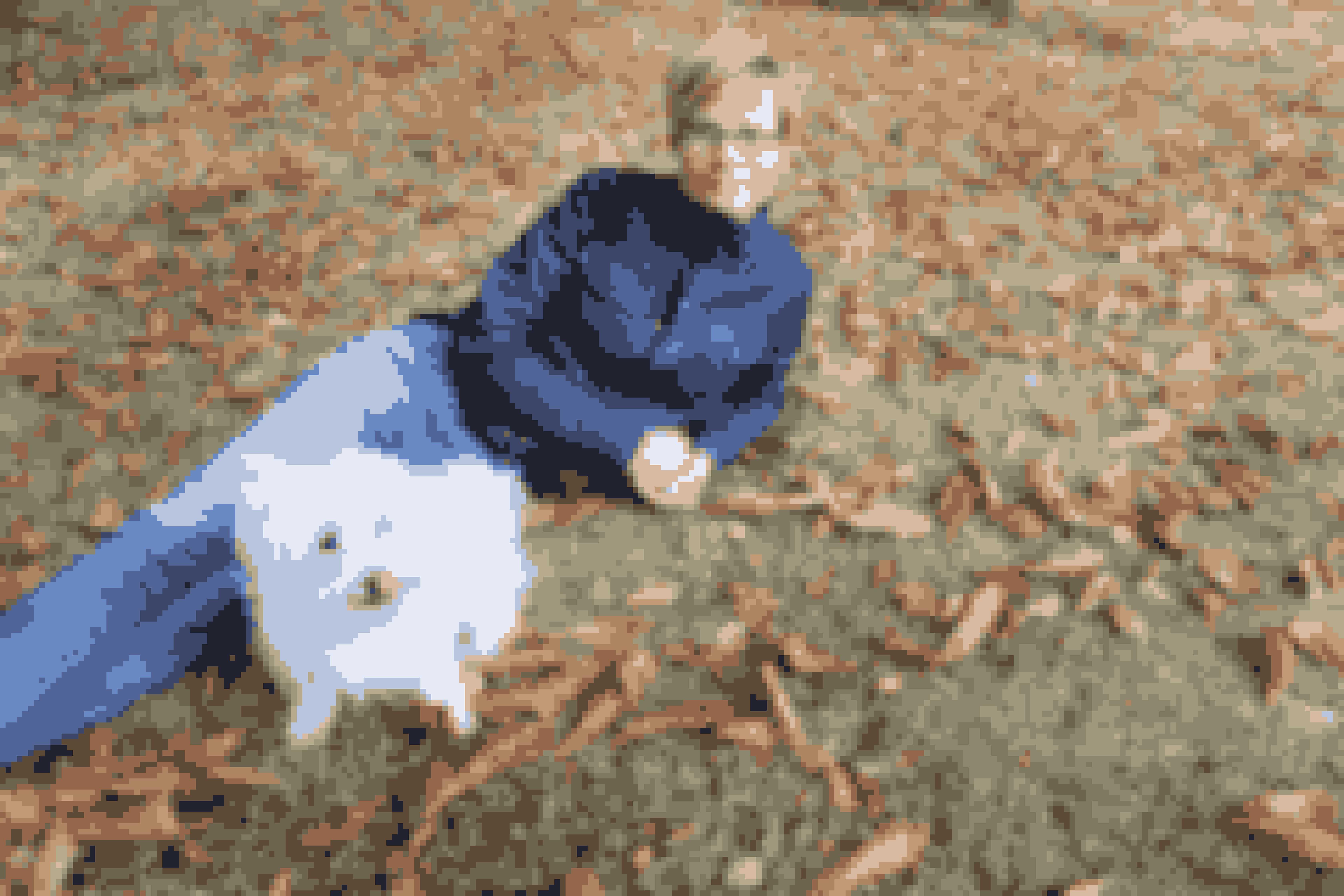 Dyr er vigtige for Marzcia – her ses hun med hunden Noona.