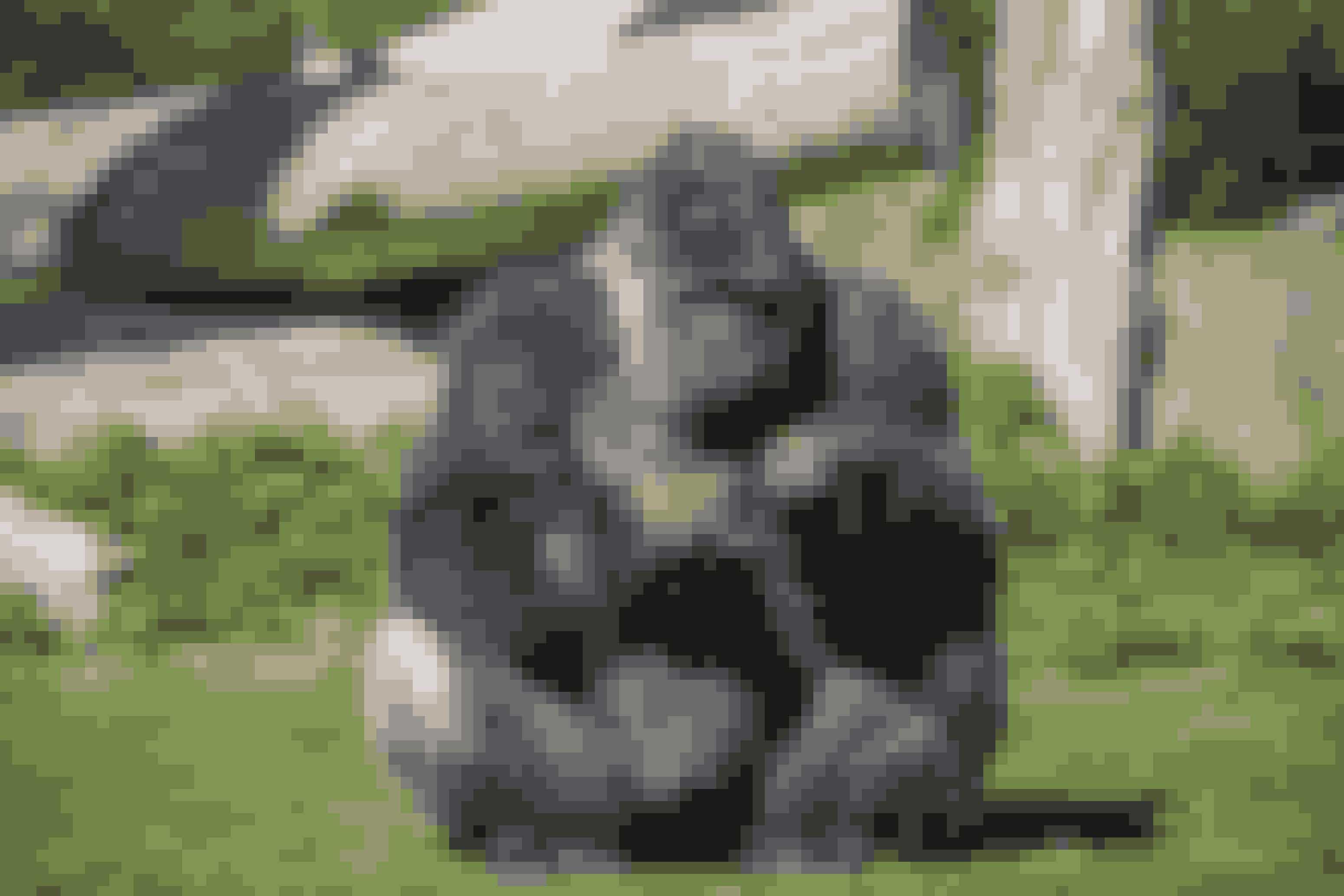 Ulvehylene i serien kommer ikke fra ægte ulve. De er faktisk optaget med gorillaer!