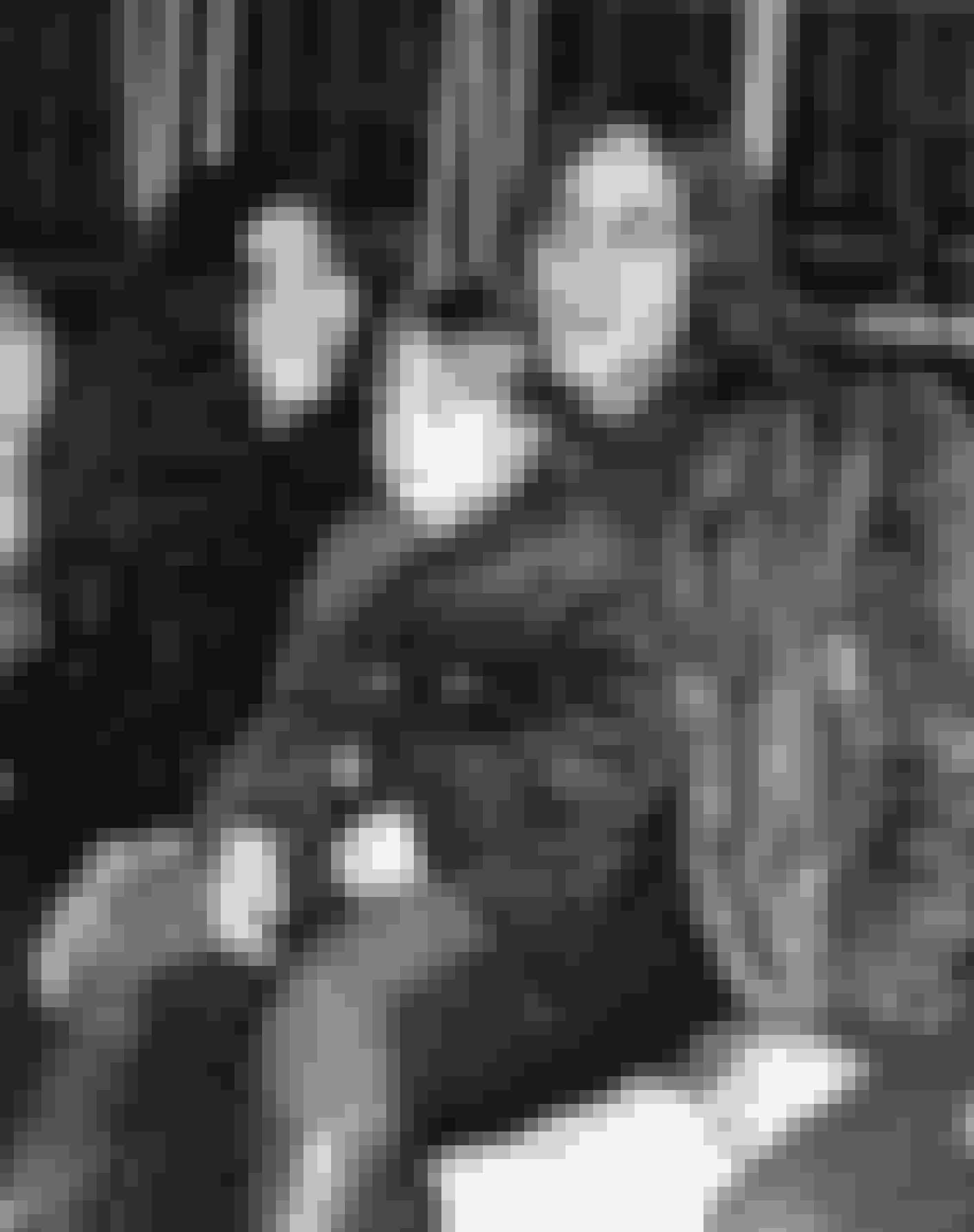 John LennonVores allesammens Beatles-darling John Lennon endte som 4-årig med at bo hos sin tante Mimi, efter at hans biologiske forældre gik fra hinanden. Sangerens far var sømand, og var hverken til stede da Lennon blev født eller meget af hans barndom derefter. Hans mor fandt en ny mand, men kom ofte på besøg hos tante Mimi for at se sin søn. På sine mange besøg lærte hun sin søn at spille klaver og banjo, og det var også hende, der købte Lennons første guitar. På trods af adoptionen er det altså sangerens biologiske mor, som vi kan takke for musik-geniet.